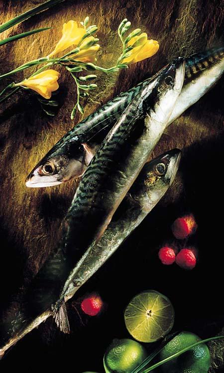 mcbr sardin